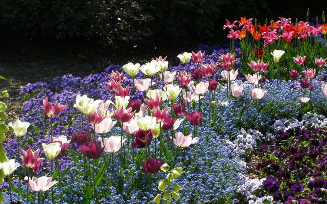 Unbemerkt erblüht die Norddeutsche Gartenschau