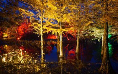 Der Wasserwald